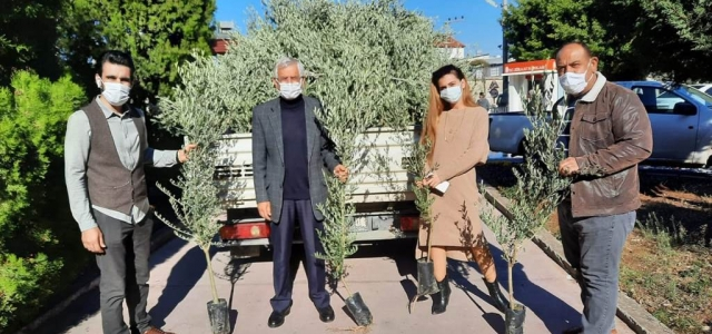 Arsuz Belediyesi'nden Vatandaşlara 'Zeytin Ağacı'