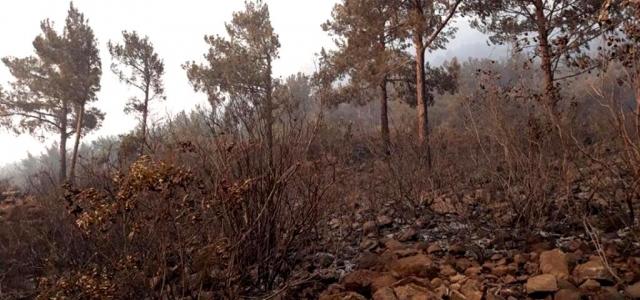 Arsuz'daki Yangında Soğutma Çalışmaları Sürüyor