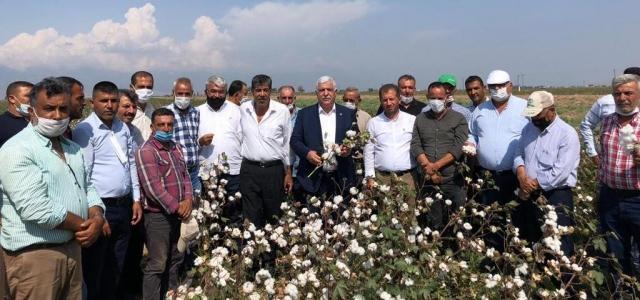 CHP'li Tokdemir; 'Pamuk Üreticisi Bu Yıl da Mağdur'