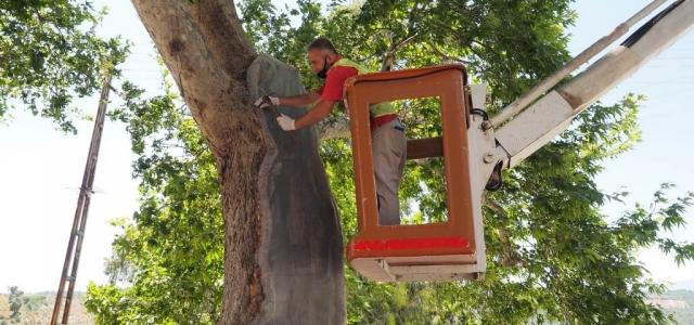 Hatay'ın Ağaçları Sağlıkla Büyüyor