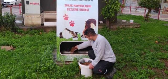 İskenderun Belediyesi Sokak Hayvanlarını Unutmuyor