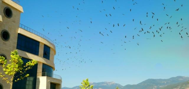 İSTE, Semalarında Göçmen Kuşlar