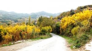 Belen'de Sarı Sonbahar Büyülüyor!
