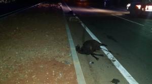 Hassa Karayolunda Kaza: 13 Küçükbaş Hayvan Telef Oldu