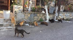 HBB Sokak Hayvanlarını Unutmadı