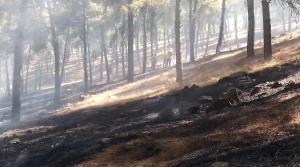 Kırıkhan'da Mesire Alanında Yangın
