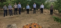 Arsuz'da Kayısı Hasadı