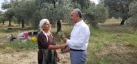 Arsuz'da Zeytin Hasadı Başladı