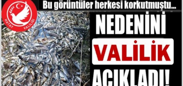 Toplu Balık Ölümüne Valilikten Açıklama